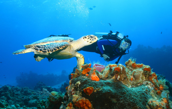 Scuba Diving Belize